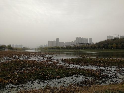 taohua3.jpg